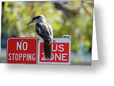 Kookaburra On A Road Sign Greeting Card