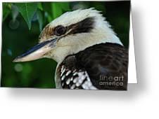 Kookaburra Portrait By Kaye Menner Greeting Card