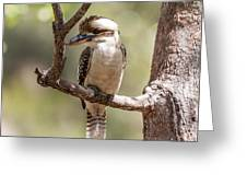 Kookaburra Sits In The Ol Gum Tree Greeting Card