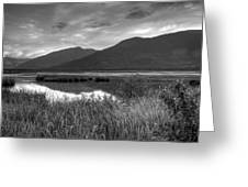 Kootenay Marshes In Black And White Greeting Card