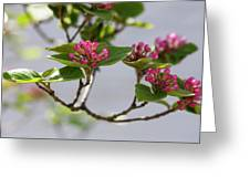 Korean Spice Viburnum Greeting Card