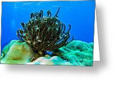 Kosrae Crinoid Greeting Card