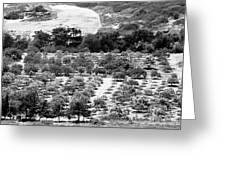 Kourion Farm Greeting Card