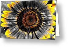 Krypton's Sun Flower Bwy Greeting Card