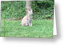 Ks Bobcat Greeting Card