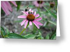 Kung Fu Fighting Bees Greeting Card