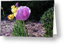Kv Tulips Greeting Card