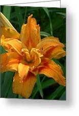 Kwanzaa Lily Greeting Card