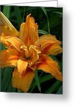 Kwanzaa Lily Watercolor Greeting Card