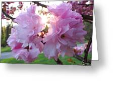 Kwanzan Cherry Blossom Greeting Card
