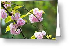 Kwanzan Cherry Bossom Flowers Greeting Card