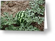 Ky Watermelon Greeting Card