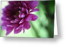 La Fleur De L' Amour Greeting Card