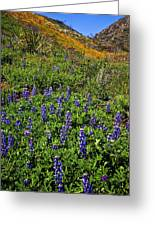 La Jolla Canyon Lupines Greeting Card