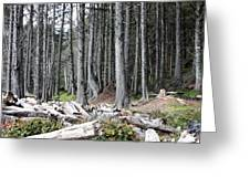 La Push Beach Trees Greeting Card