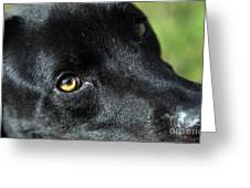 Lab Mix Greeting Card