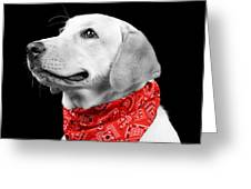 Labrador In Black And White  Greeting Card