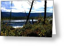 Labrador Pond Greeting Card