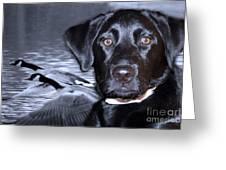 Labrador Retriever Thoughts  Greeting Card