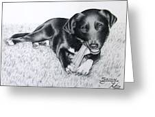 Labrador Samy Greeting Card
