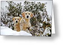 Labrador's In Snow Greeting Card
