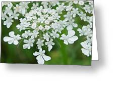 Lace On Stems Greeting Card
