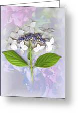 Lacecap Hydrangea Greeting Card