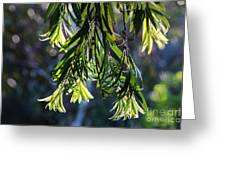 Lacey Leaves Greeting Card