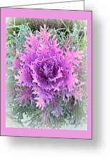 Lacey Plant Greeting Card