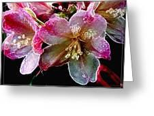 Lacey Rhodi Greeting Card