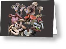Lactarius 1 Greeting Card