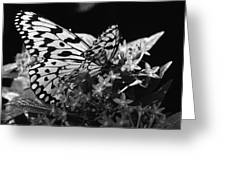Lacy Black And White Greeting Card