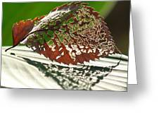 Lacy Leaf Greeting Card