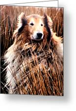 Laddie In Charge Greeting Card