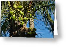 Laden Palm Tree Greeting Card