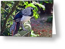Lady Amherst's Pheasant Greeting Card