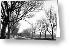 Lady Anne's Drive, Holkham Greeting Card