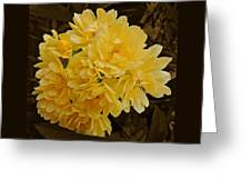 Lady Banks Rose With Sepia Background Greeting Card