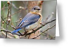 Lady Blue Greeting Card