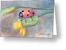 Lady Bug - Lady Bug... Greeting Card