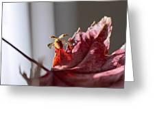 Lady Bug Flight Greeting Card