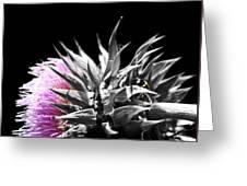 Lady Bug Thistle Greeting Card