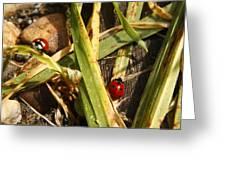 Lady Bugs Greeting Card
