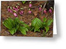 Lady Slipper Family Greeting Card