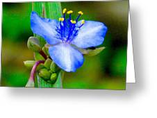 Lady Slipper Yard Weed. Greeting Card