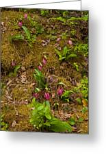 Lady Slippers And Star Flower Greeting Card