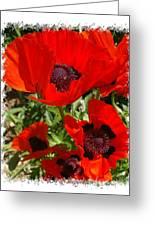 Ladybird Poppy Greeting Card