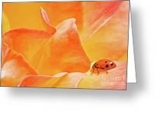 Ladybug Alights Greeting Card