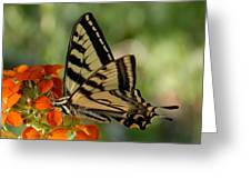 Ladybug And Tigertail Greeting Card