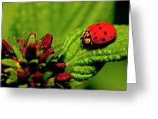 Ladybug Atop A Leaf Greeting Card